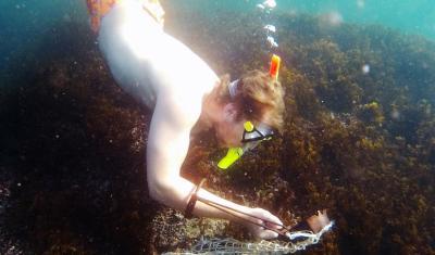 Mussel diving